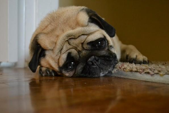 7 знаци дека треба да обрнете внимание на однесувањето на вашето куче
