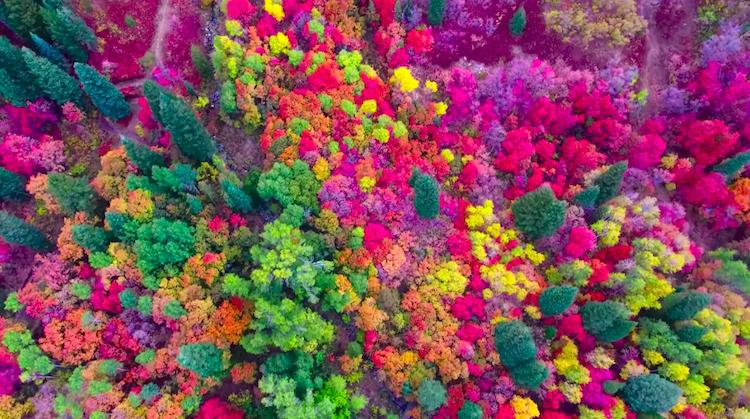 Неверојатна снимка од дрон што ги прикажува живите бои на Јута во есен