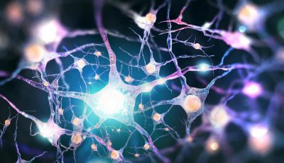 Што ја прави човечката интелигенција толку уникатна?