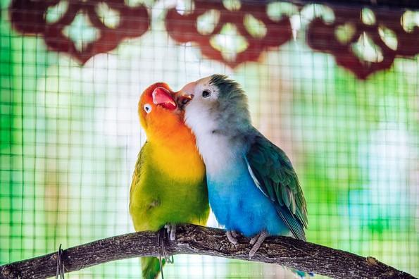 20 парови животни кои докажуваат дека љубовта сепак постои