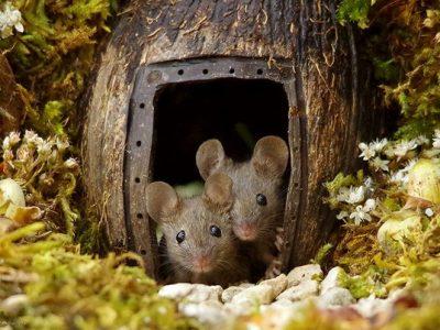 Фотограф открил семејство глувци во неговата градина и им изградил мало село
