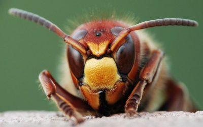 Кои инсекти предизвикуваат најмногу болка со нивниот убод?