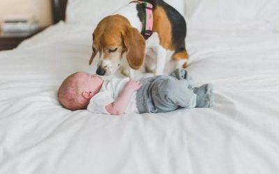 Еве што навистина се случува кога ќе ги оставите вашите малечки со куче