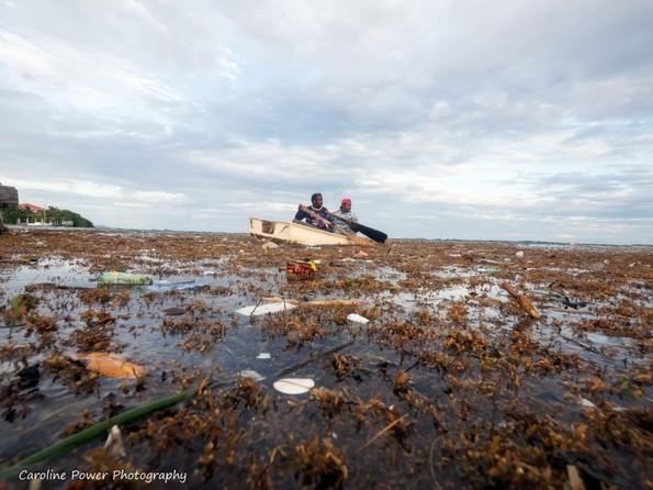 Вознемирувачки фотографии што го прикажуваат влијанието на загадувањето со пластика врз желките