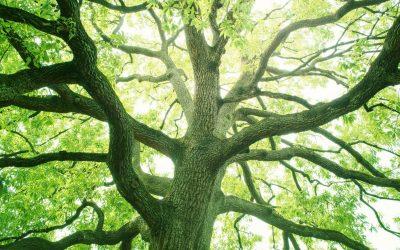 4 ексцентрични начини на кои дрвата можат да ве излечат