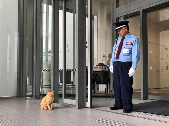 Две мачки се шегуваат со обезбедување на музеј повеќе од две години