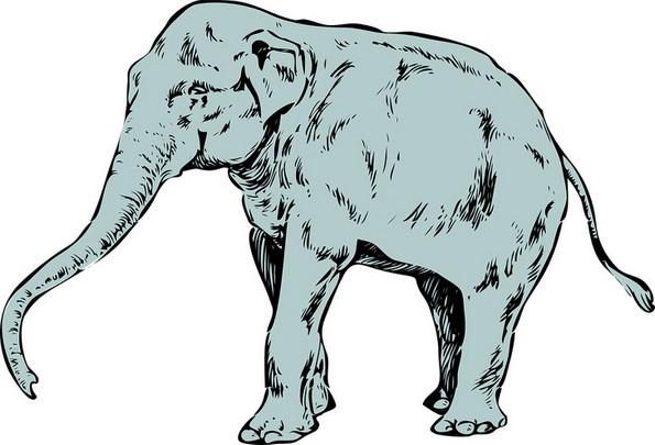 Првото животно што ќе го забележите открива многу за вашиот карактер