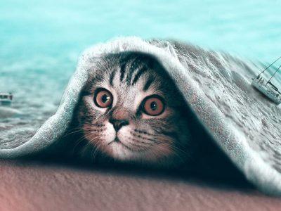Надреални фотоманипулации на фотографии со животни