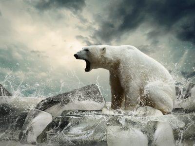 Од 1970-та година до сега, уништени се 60% од дивиот свет