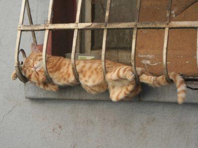 Доколку се чувствувате тажно, овие заспани мачки ќе ви го подобрат расположението