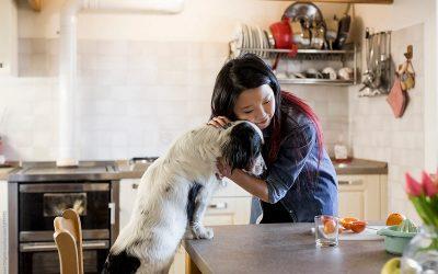 5 прехранбени продукти што ќе го подобрат вашето, но и здравјето на вашето куче