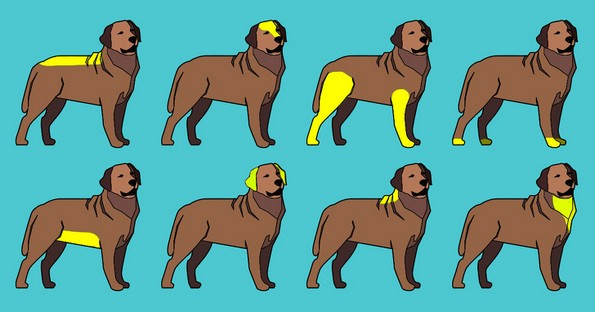 8 делови од телото на вашето куче што би требало редовно да ги масирате