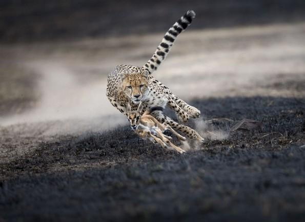 Најдобрите фотографии за 2018-та година според National Geographic