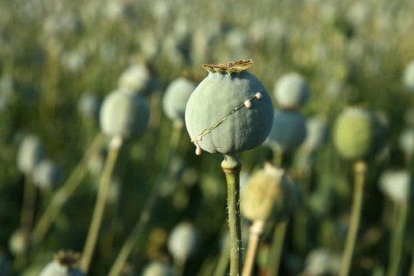 10 видови дрога што можеби растат во вашиот двор