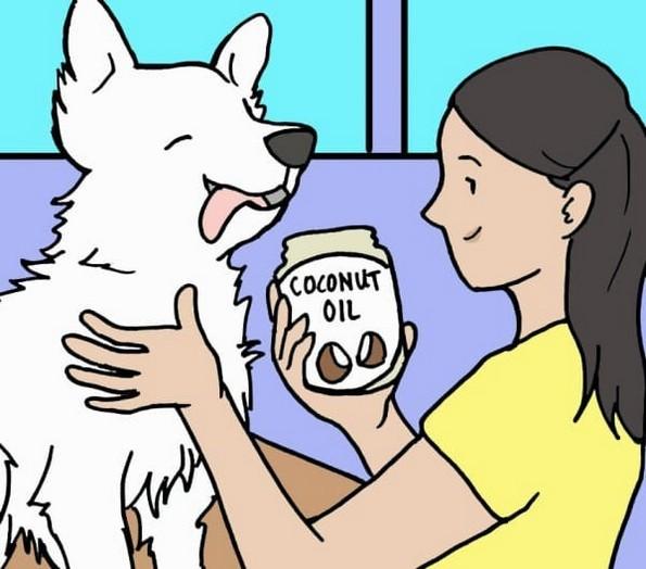 Како да се ослободите од болвите на вашето куче?