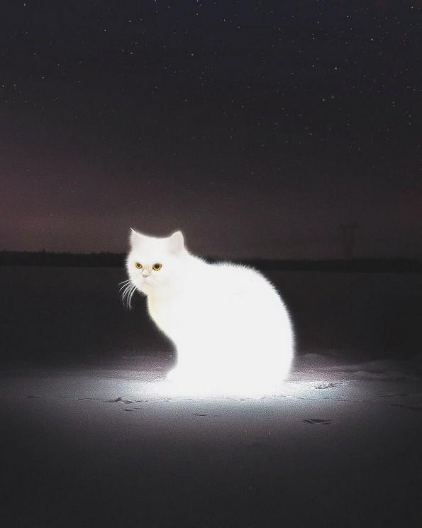Надреални фотоманипулации што ја тестираат логиката
