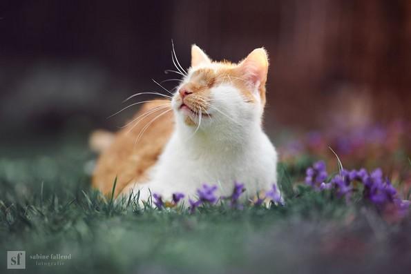 Слатки фотографии од слепо маче што ќе ви го стопат срцето