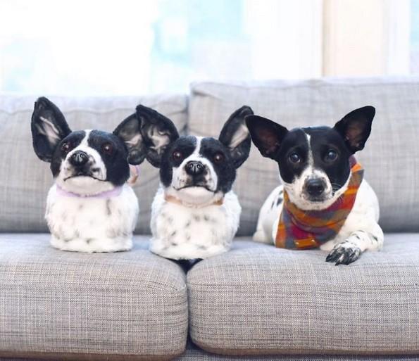 Компанија прави домашни влечки кои изгледаат како миленичињата на купувачите