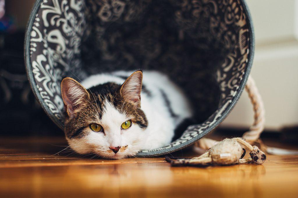 Зошто е важна стерилизацијата на мачките?