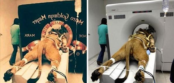 Популарни лажни фотографии што го измамија целиот Интернет