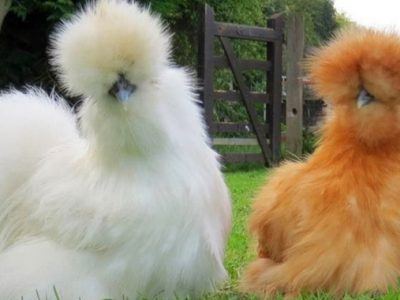 Урнебесни фотографии од животни со лоши фризури