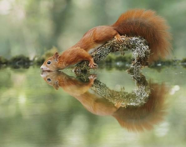 Фотограф прави смешни и слатки фотографии од диви животни