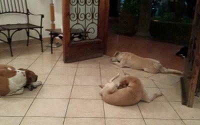 Улични кучиња се појавиле на погребот на жената што се грижела за нив