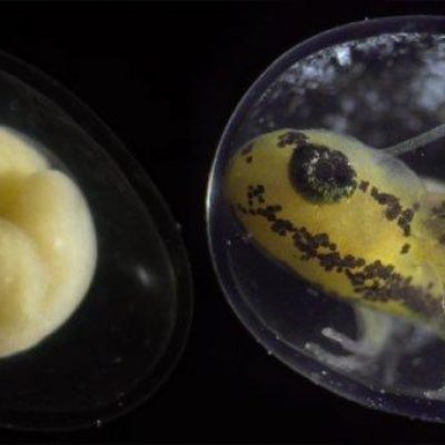 Филм што го прикажува растењето на живо суштество од една клетка