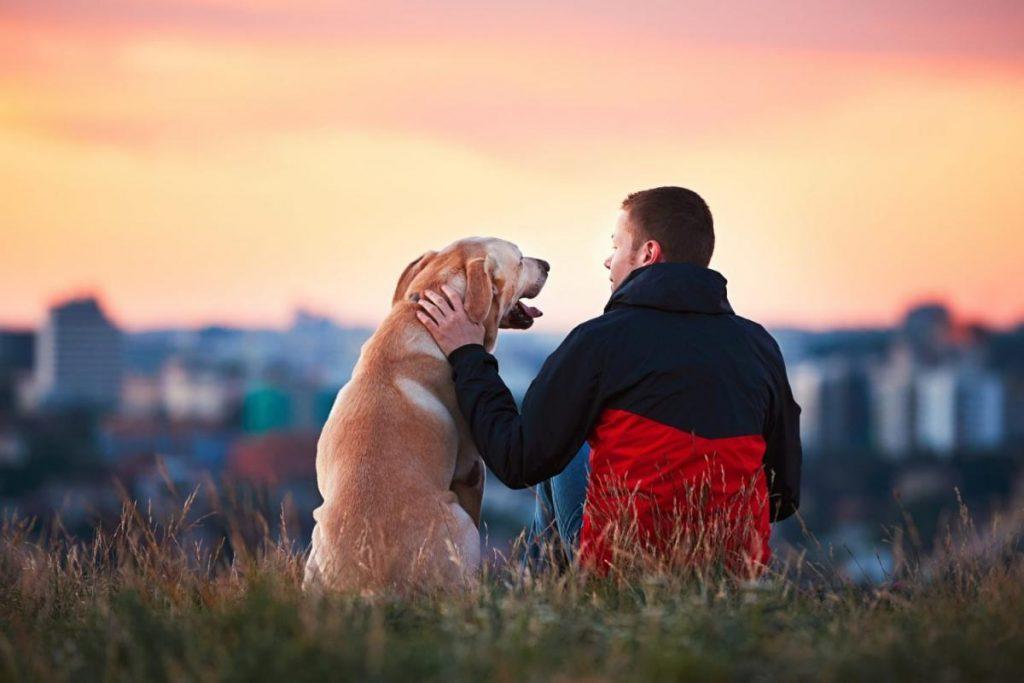 14 прашања што треба да си ги поставите пред да посвоите милениче