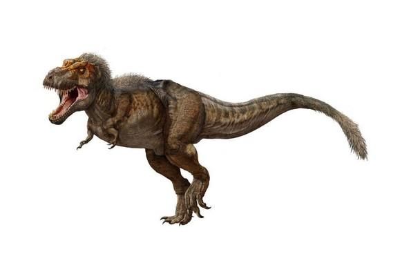 """Малечките тираносауруси биле слатки """"крзнени"""" суштества"""