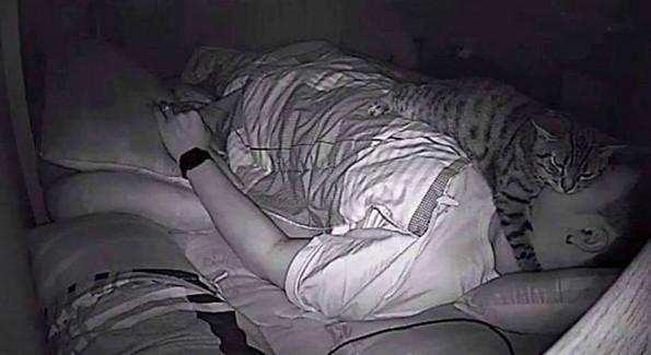 Маж поставил скриена камера за да открие што прави неговата мачка навечер