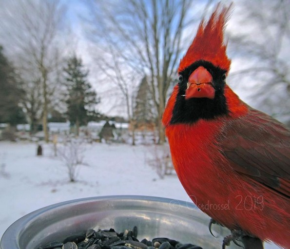 Извонредни фотографии од птици направени со скриена камера