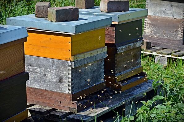 8 мали нешта што можете да ги направите за да им помогнете на пчелите да преживеат