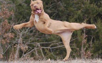 Сопственици ги покажуваат чудните однесувања на нивните кучиња
