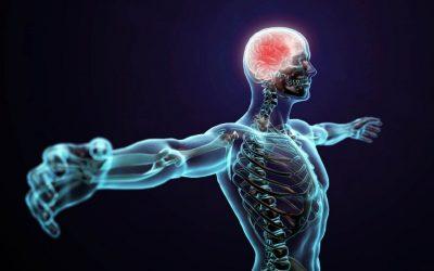 Дали човечкото тело навистина се обновува на секои 7 години?
