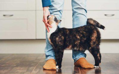 Зошто вашата мачка постојано ве следи?