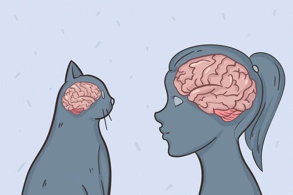 29 факти што докажуваат колку се неверојатни мачките