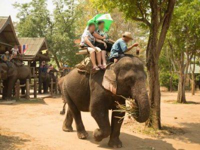 9 видови забава во коишто љубителите на животни не би требало да бидат вклучени