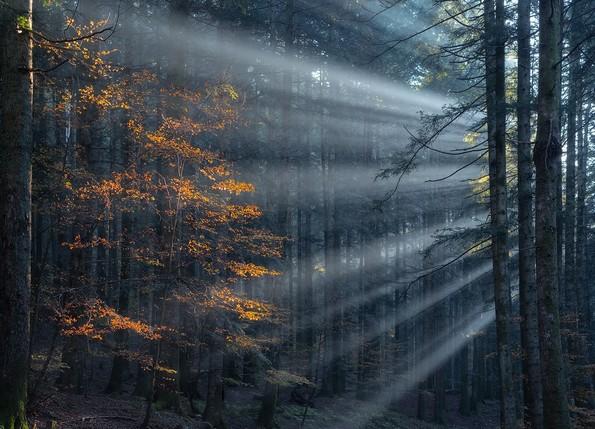 Фотограф ја доловува магичната убавина на шумите