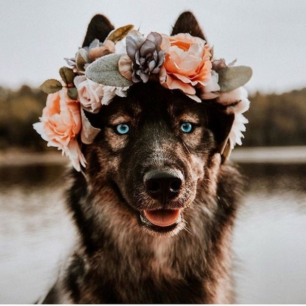 Артистка прави магични венци од цветови за животни