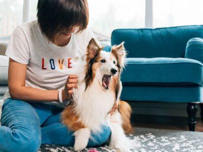 Како да му покажете на вашето куче дека го сакате според неговиот љубовен јазик?