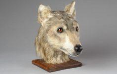 Реконструкција на лице ни овозможува да видиме како изгледале кучињата пред 5.000 години