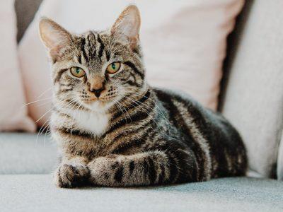 Зошто вашата мачка не треба често да излегува надвор?