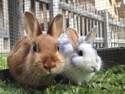 4 нешта што треба да ги знаете доколку сакате домашно милениче зајак