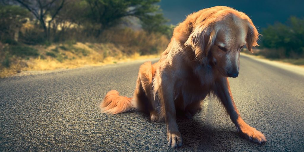 Губењето милениче е потрагично отколку што мислат повеќето луѓе