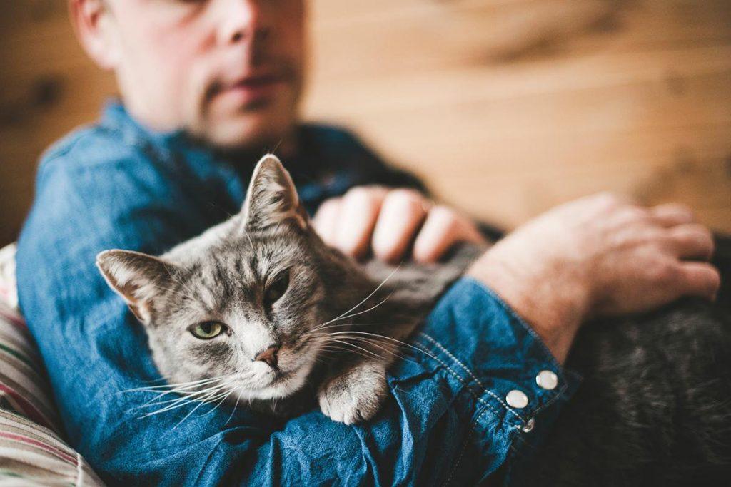 Истражување: Мачките го препознаваат своето име, само одбираат да нè игнорираат