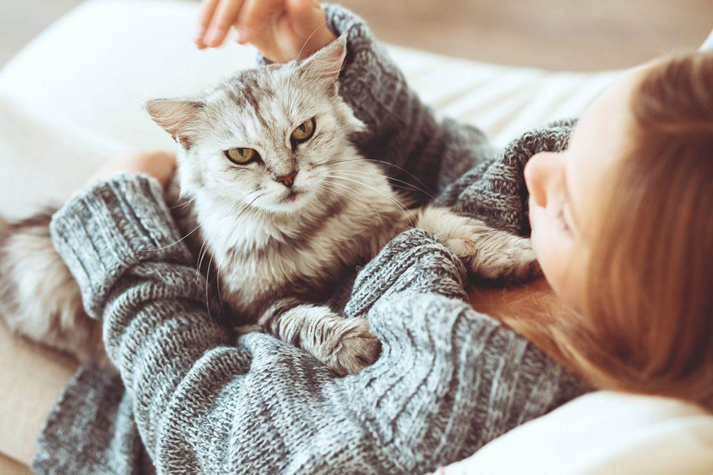 Истражување: Сопствениците на мачки настојуваат да бидат поинтелигентни