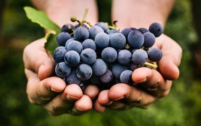 Кои се здравствените придобивки од грозјето?
