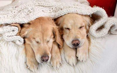 Пријателството меѓу ова слепо кученце и неговото куче-помошник ќе ви ја стопли душата