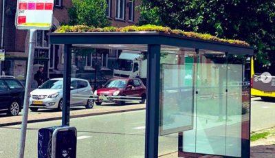 Холанѓаните ги претвориле покривите од 316 автобуски постојки во места каде што пчелите ќе можат да се опрашуваат